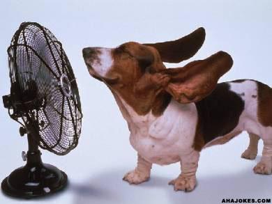 hot-summer-dog
