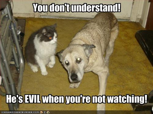 funny-pictures-dog-says-that-cat-is-evil-when-you-are-not-watching
